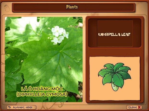Nhà ai cũng 3 đời cày Plants vs Zombies nhưng chẳng ai biết hết những loại cây trong game này! - Ảnh 21.