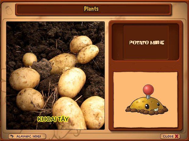 Nhà ai cũng 3 đời cày Plants vs Zombies nhưng chẳng ai biết hết những loại cây trong game này! - Ảnh 6.