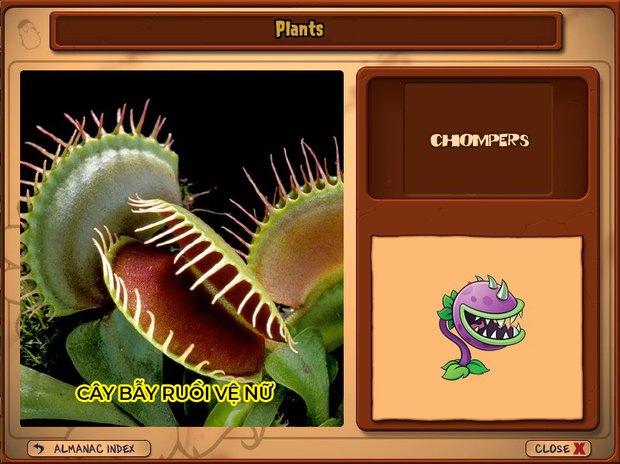 Nhà ai cũng 3 đời cày Plants vs Zombies nhưng chẳng ai biết hết những loại cây trong game này! - Ảnh 8.