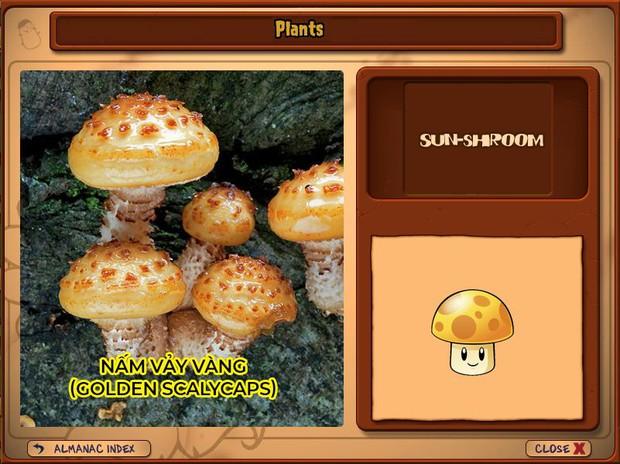 Nhà ai cũng 3 đời cày Plants vs Zombies nhưng chẳng ai biết hết những loại cây trong game này! - Ảnh 10.
