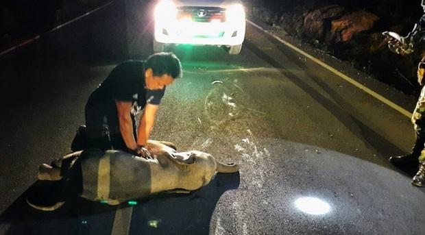 Nhận cuộc gọi khẩn cấp, nhân viên choáng váng khi phải thực hiện hồi sức tim phổi cho voi con bị tai nạn và 10 phút sau nhận kết quả không ngờ - Ảnh 1.