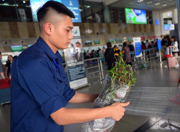 Các hãng hàng không nhận vận chuyển cành đào, cành mai dịp Tết Tân Sửu 2021 - Ảnh 1.