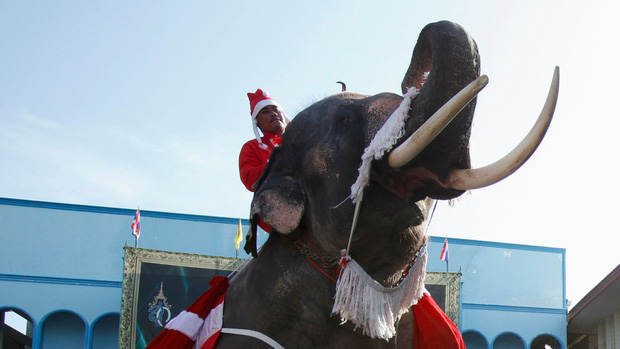 Ông già Noel không thèm tuần lộc, cưỡi hẳn voi đi phát quà khiến người dân lác mắt - Ảnh 1.