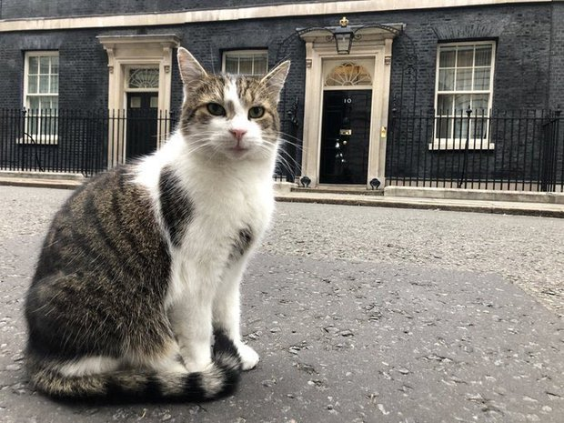 """Mèo Larry - """"Tổng quản"""" dinh Thủ tướng Anh lại gây bão vì hành động siêu ngớ ngẩn khiến phóng viên bỏ rơi cả Thủ tướng để chạy theo chụp hình - Ảnh 4."""