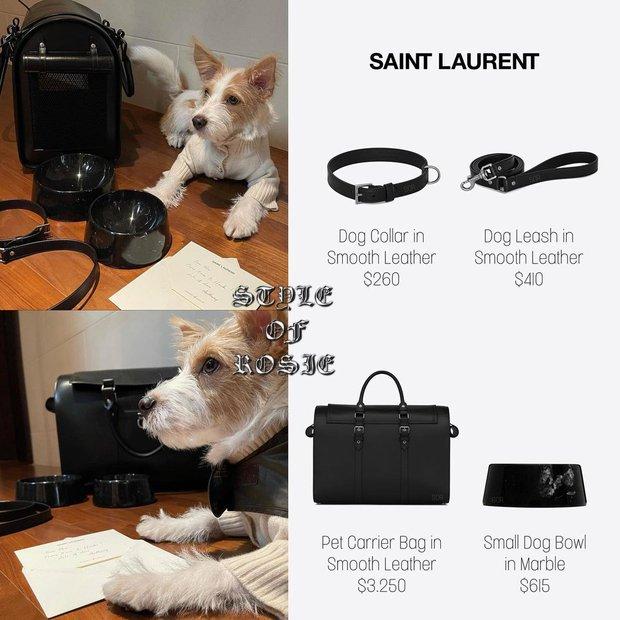 Sướng như boss cún của Rosé: Được Saint Laurent tặng set quà 105 triệu, bát ăn cơm cũng toát lên đẳng cấp - Ảnh 3.