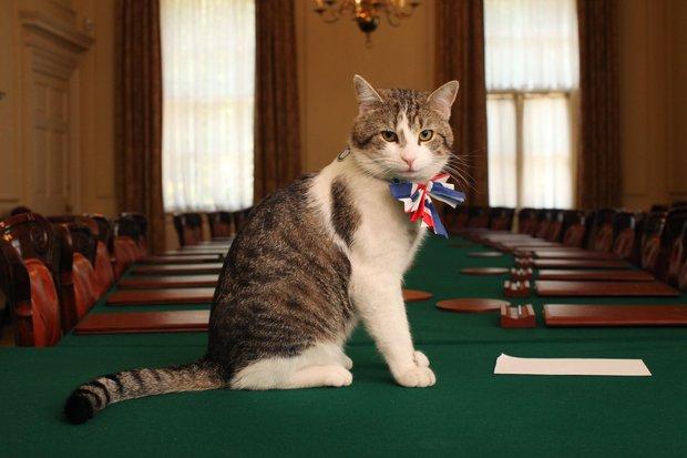"""Mèo Larry - """"Tổng quản"""" dinh Thủ tướng Anh lại gây bão vì hành động siêu ngớ ngẩn khiến phóng viên bỏ rơi cả Thủ tướng để chạy theo chụp hình - Ảnh 5."""