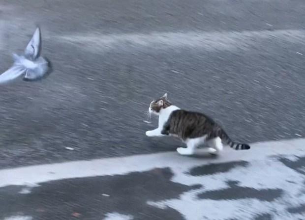 """Mèo Larry - """"Tổng quản"""" dinh Thủ tướng Anh lại gây bão vì hành động siêu ngớ ngẩn khiến phóng viên bỏ rơi cả Thủ tướng để chạy theo chụp hình - Ảnh 3."""