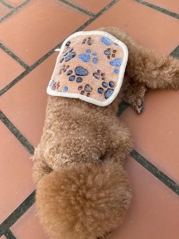 Tai nạn shopping online: Sen mua chăn cho boss nhưng nhận hàng bé tẹo như... miếng lót nồi - Ảnh 4.