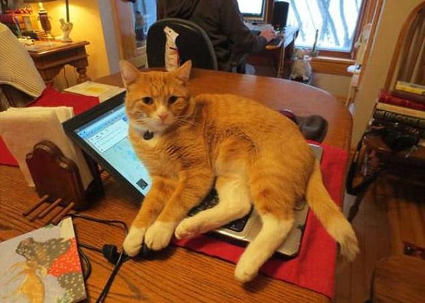 Hoàng thượng luôn có nhiều pha xử lý đi vào lòng đất, hất tung iMac xuống nền rồi quay lưng bỏ đi - Ảnh 4.