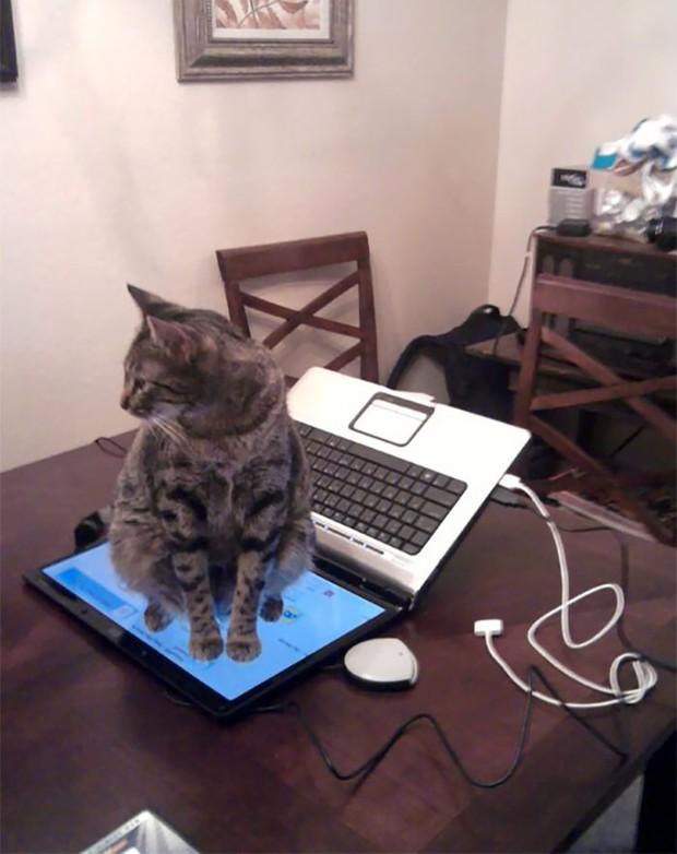 Hoàng thượng luôn có nhiều pha xử lý đi vào lòng đất, hất tung iMac xuống nền rồi quay lưng bỏ đi - Ảnh 5.