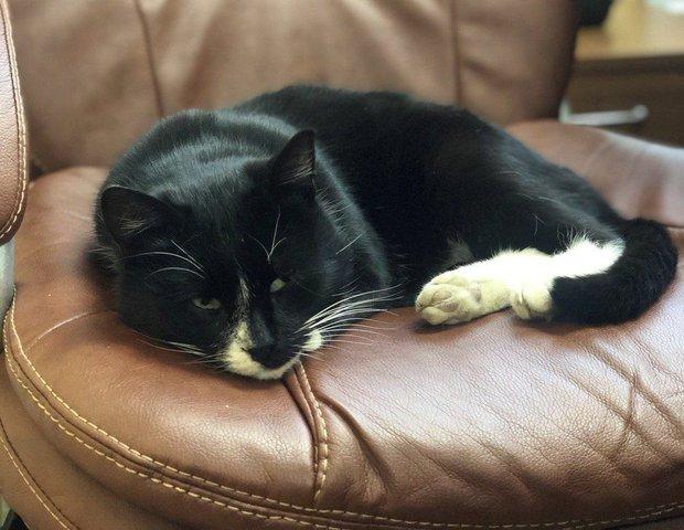 Được cứu từ bãi rác, chú mèo hoang trở thành Thứ trưởng Môi trường trong đúng một nốt nhạc - Ảnh 4.