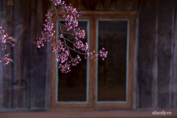 Choáng ngợp với cảnh hàng trăm cây hoa mai anh đào nở rợp trời ở ngôi làng đẹp lạ như Tây Tạng, nằm ngay gần trung tâm TP. Đà Lạt mà không phải ai cũng biết - Ảnh 12.