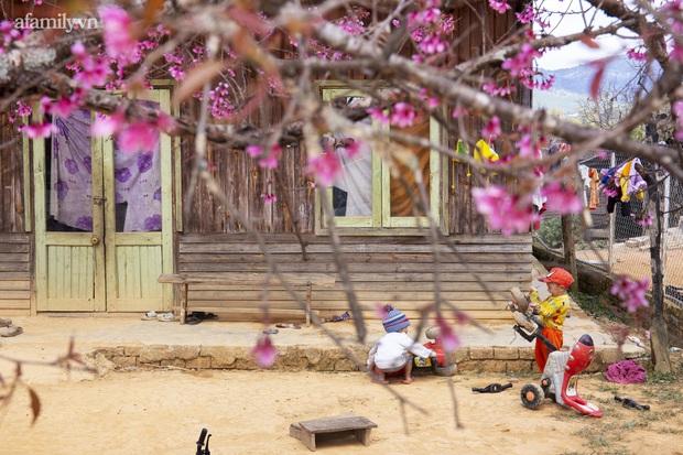 Choáng ngợp với cảnh hàng trăm cây hoa mai anh đào nở rợp trời ở ngôi làng đẹp lạ như Tây Tạng, nằm ngay gần trung tâm TP. Đà Lạt mà không phải ai cũng biết - Ảnh 6.