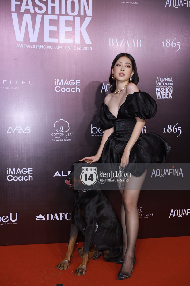 Karik, Wowy và team Rap Việt chiếm spotlight cực mạnh, chưa bằng Á hậu Phương Nga dắt... cún cưng lên thảm đỏ AVIFW ngày 2 - Ảnh 16.