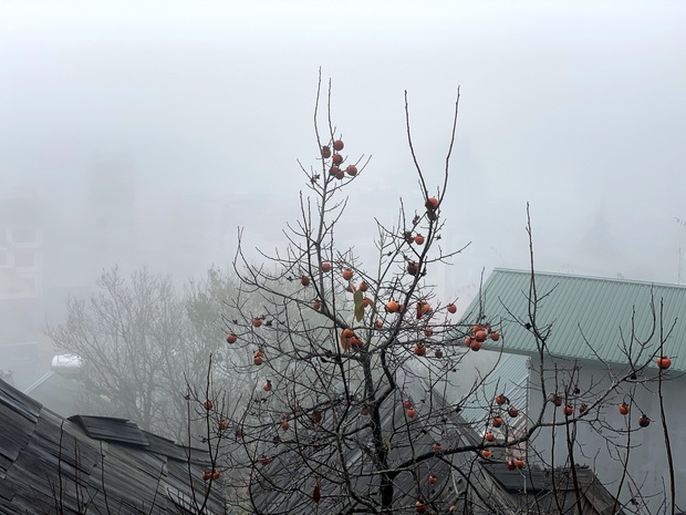 Ảnh, clip: Nhiệt độ giảm mạnh chỉ còn 8 độ C, thị trấn Sa Pa chìm trong sương mù, rét buốt - Ảnh 3.