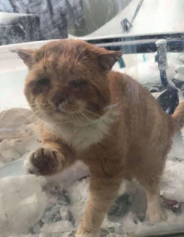 Chú mèo mặt khổ, bệnh tật toàn thân gõ cửa nhà dân xin ở nhờ giữa cơn bão tuyết - Ảnh 1.