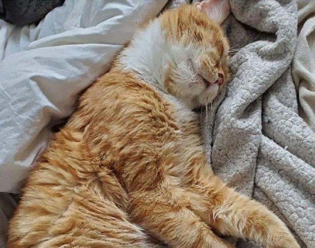 Chú mèo mặt khổ, bệnh tật toàn thân gõ cửa nhà dân xin ở nhờ giữa cơn bão tuyết - Ảnh 5.