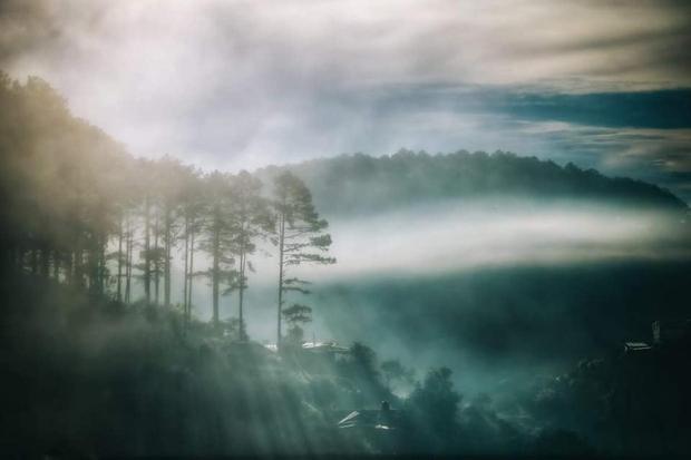 Chàng trai lên Đà Lạt dựng ngôi nhà gỗ xinh xắn, mở nông trại chiết tinh dầu: Nhìn là thấy một bầu trời bình yên - Ảnh 1.