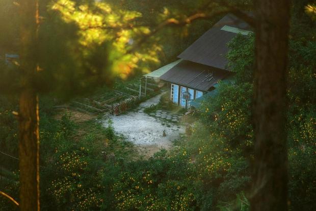 Chàng trai lên Đà Lạt dựng ngôi nhà gỗ xinh xắn, mở nông trại chiết tinh dầu: Nhìn là thấy một bầu trời bình yên - Ảnh 3.
