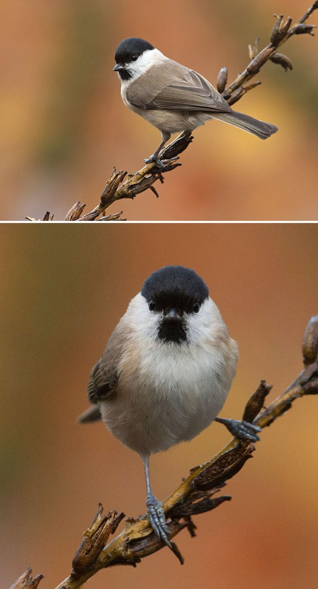 Khi lũ chim bị dìm hàng tập thể qua bộ ảnh góc nghiêng thần thánh, góc thẳng hết hồn - Ảnh 2.