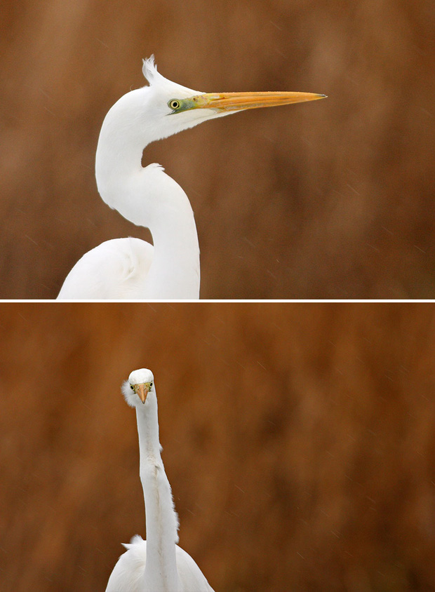Khi lũ chim bị dìm hàng tập thể qua bộ ảnh góc nghiêng thần thánh, góc thẳng hết hồn - Ảnh 3.