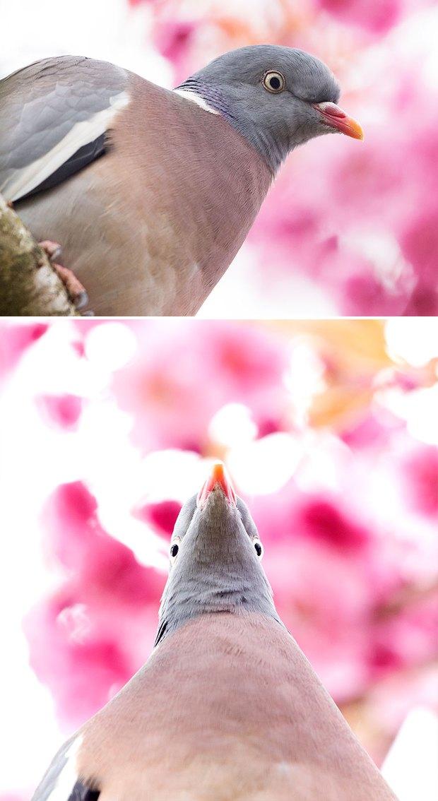 Khi lũ chim bị dìm hàng tập thể qua bộ ảnh góc nghiêng thần thánh, góc thẳng hết hồn - Ảnh 11.