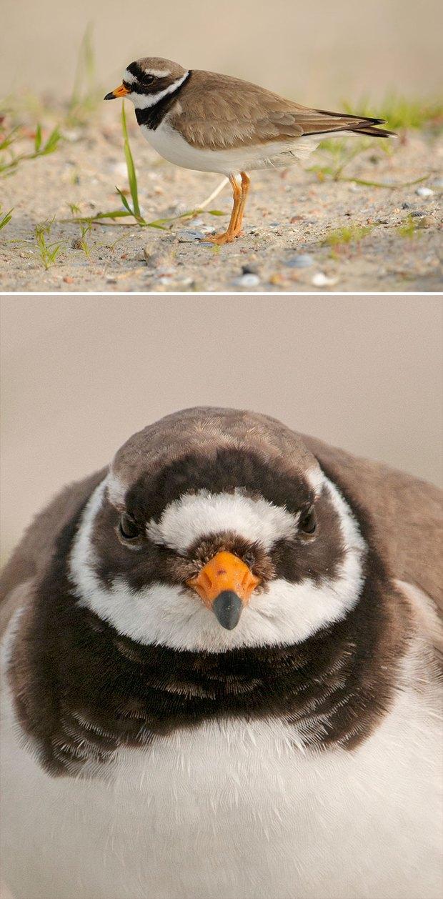 Khi lũ chim bị dìm hàng tập thể qua bộ ảnh góc nghiêng thần thánh, góc thẳng hết hồn - Ảnh 8.