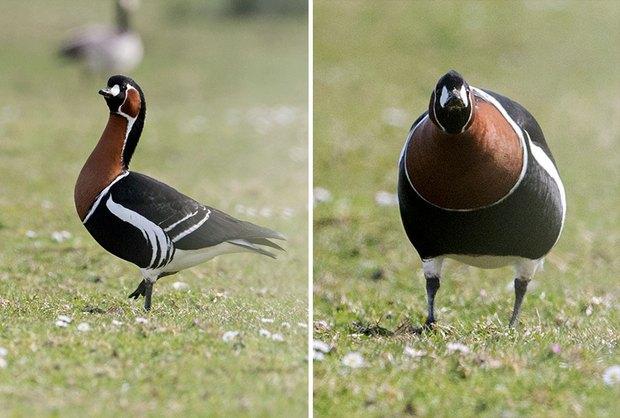 Khi lũ chim bị dìm hàng tập thể qua bộ ảnh góc nghiêng thần thánh, góc thẳng hết hồn - Ảnh 4.