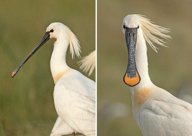 Khi lũ chim bị dìm hàng tập thể qua bộ ảnh góc nghiêng thần thánh, góc thẳng hết hồn - Ảnh 5.