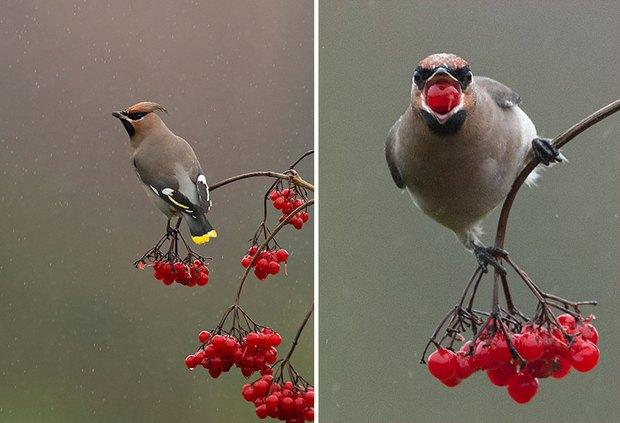 Khi lũ chim bị dìm hàng tập thể qua bộ ảnh góc nghiêng thần thánh, góc thẳng hết hồn - Ảnh 13.
