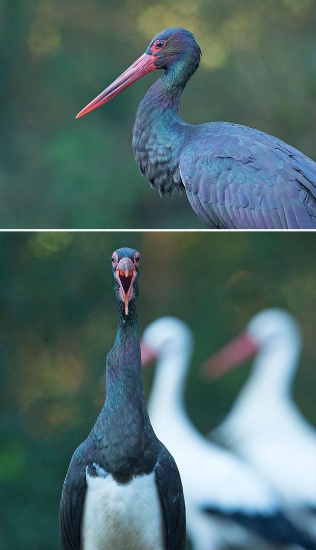 Khi lũ chim bị dìm hàng tập thể qua bộ ảnh góc nghiêng thần thánh, góc thẳng hết hồn - Ảnh 10.