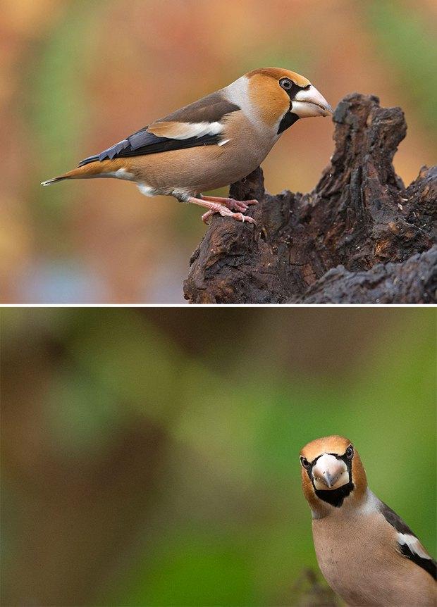 Khi lũ chim bị dìm hàng tập thể qua bộ ảnh góc nghiêng thần thánh, góc thẳng hết hồn - Ảnh 12.