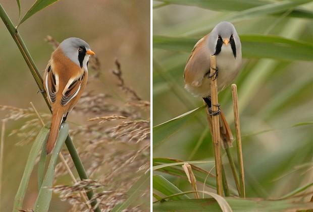 Khi lũ chim bị dìm hàng tập thể qua bộ ảnh góc nghiêng thần thánh, góc thẳng hết hồn - Ảnh 7.