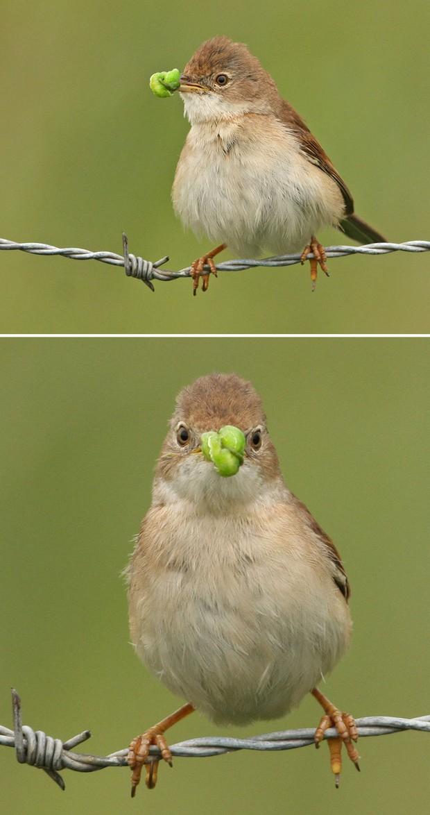 Khi lũ chim bị dìm hàng tập thể qua bộ ảnh góc nghiêng thần thánh, góc thẳng hết hồn - Ảnh 15.