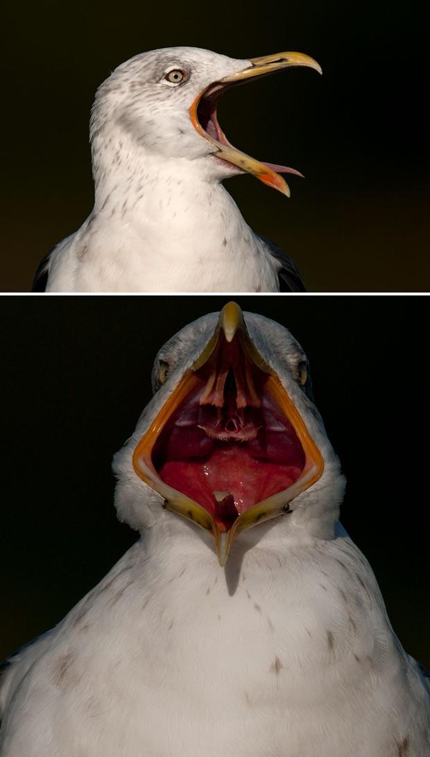 Khi lũ chim bị dìm hàng tập thể qua bộ ảnh góc nghiêng thần thánh, góc thẳng hết hồn - Ảnh 16.