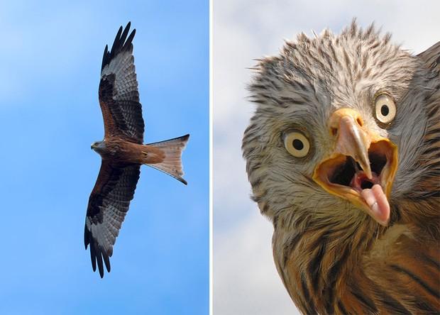 Khi lũ chim bị dìm hàng tập thể qua bộ ảnh góc nghiêng thần thánh, góc thẳng hết hồn - Ảnh 17.
