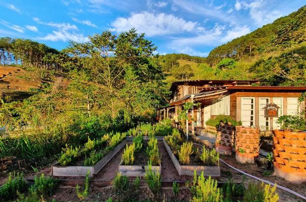 Chàng trai lên Đà Lạt dựng ngôi nhà gỗ xinh xắn, mở nông trại chiết tinh dầu: Nhìn là thấy một bầu trời bình yên - Ảnh 12.