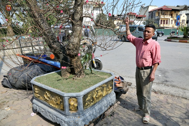 Cây đào trăm tuổi vừa xuống phố Hà Nội đã gặp khách chi gần trăm triệu thuê về chơi Tết Nguyên đán - Ảnh 10.