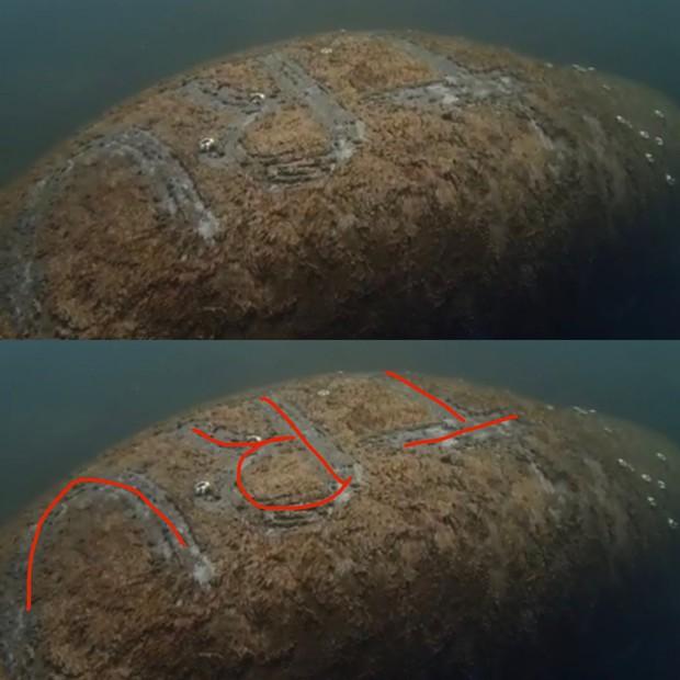 Phát hiện chú lợn biển bị xăm chữ Trump to đùng trên lưng - Ảnh 2.