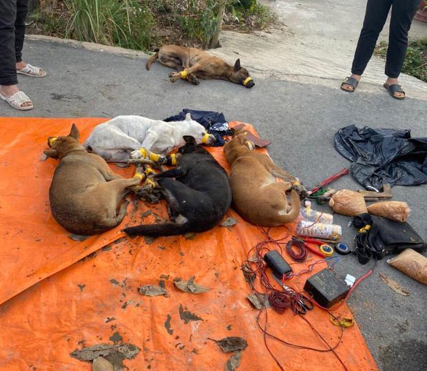 Bình Dương: Kẻ trộm chó liều lĩnh lái ô tô tông thẳng vào Cảnh sát khi bị phát hiện - Ảnh 2.