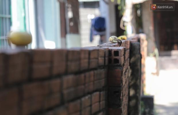 """Cận cảnh đàn khỉ """"đại náo"""" khu dân cư ở Sài Gòn khiến người dân mệt mỏi: Chúng rất sợ đàn ông nhưng lại không sợ phụ nữ - Ảnh 6."""