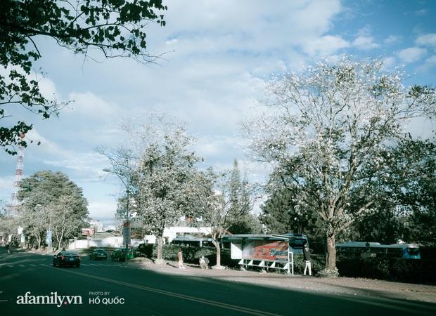 Đẹp đến khó tin: Hàng trăm cây hoa ban nở trắng trời khắp Đà Lạt, cảnh tượng từ xa nhìn như tuyết phủ bao quanh thành phố! - Ảnh 8.
