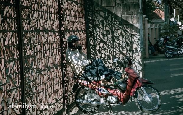 dep den kho tin: hang tram cay hoa ban no trang troi khap da lat, canh tuong tu xa nhin nhu tuyet phu bao quanh thanh pho! - anh 20