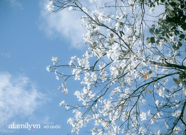 dep den kho tin: hang tram cay hoa ban no trang troi khap da lat, canh tuong tu xa nhin nhu tuyet phu bao quanh thanh pho! - anh 4