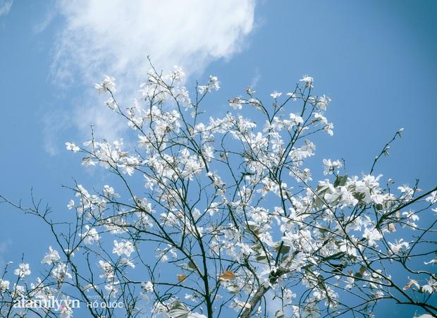 Đẹp đến khó tin: Hàng trăm cây hoa ban nở trắng trời khắp Đà Lạt, cảnh tượng từ xa nhìn như tuyết phủ bao quanh thành phố! - Ảnh 4.