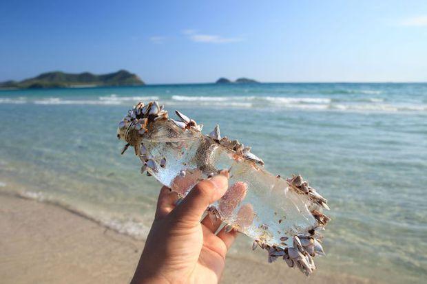 Nuôi cá, trồng rau hay ngắm biển qua ngày? Câu chuyện của một chiếc chiếu từng trải sẽ giúp bạn hiểu cuộc sống mơ ước thực ra chẳng giống tưởng tượng - Ảnh 14.