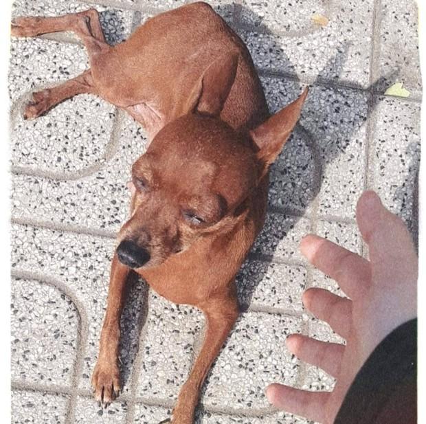 Đến lượt một chú chó ở tiệm photo bị lập page anti vì tội hay dí khách, 4 ngày đã có 3,5K followers - Ảnh 2.