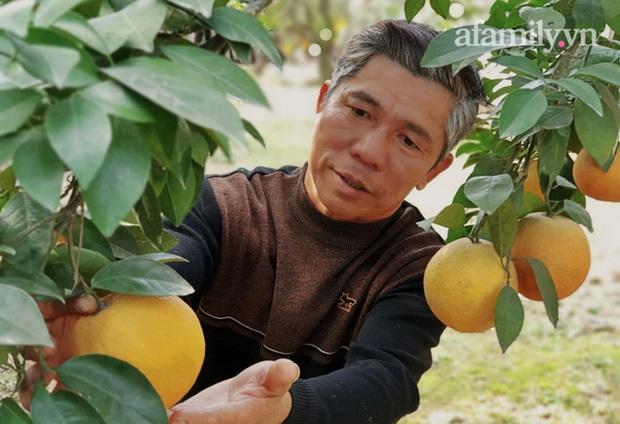 Giá khủng 80.000 đồng một quả, cam Xã Đoài - Nghệ An vẫn không đủ bán dịp Tết - Ảnh 5.