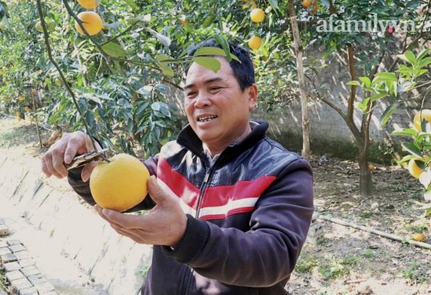 Giá khủng 80.000 đồng một quả, cam Xã Đoài - Nghệ An vẫn không đủ bán dịp Tết - Ảnh 7.