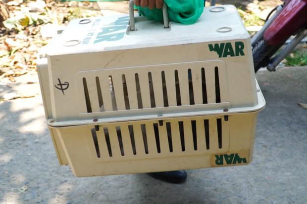 """Thêm nhiều con khỉ """"đại náo"""" khu dân cư Sài Gòn bị bắt, trong đó có cặp đực và cái - Ảnh 2."""